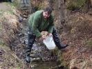 Vysazování pstruha do potoka