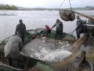 Rybářská mládež na výlovech