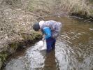 Rožmitálští rybáři vysadili pstruží plůdek