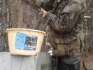 Vysazování amurů do chovných rybníků